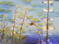 Humming Bird on Pond with Lupine